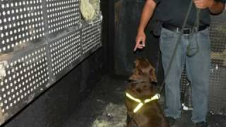 Arson Dog - 1st In The Philippines