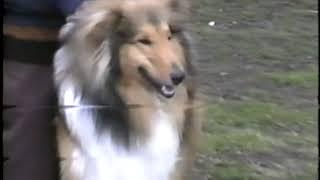 Моно шелти и колли, г. Пермь, 1999 год, экс. М. Поливанов
