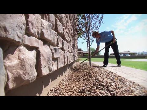 Pest Control Company in AZ Chooses Altriset for Termites