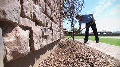 Pest Control Company in AZ Chooses Altriset for Termites