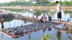 MUD CRABS & MILK FISH FARMING   How to become successful in raising  MUD CRABS & MILKFISH