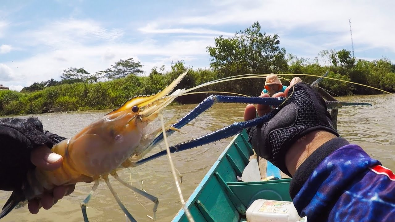 Tercyduk...!!! Inikah Monster Yang Paling Di Cari Para Pemancing Udang