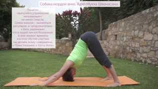 Видео уроки Открытой йоги. Поза Собака мордой вниз. Адхо мукха Шванасана. Поза Горки.