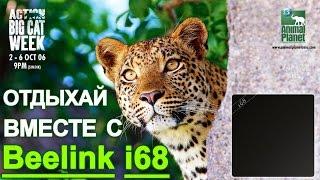 Замена спутниковому тв- Приставка Смарт ТВ на Android Beelink i68  - Часть 1 Обзор