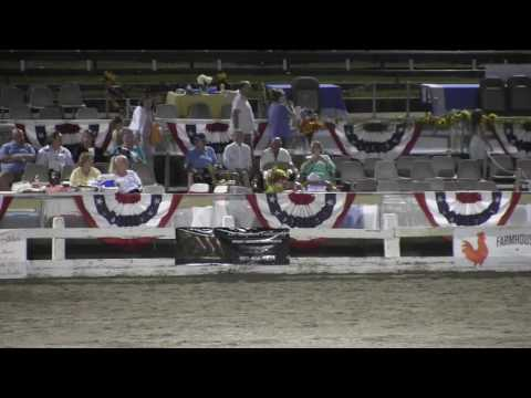 2016 Germantown Charity Horse Show Ultimate SHOBA Class