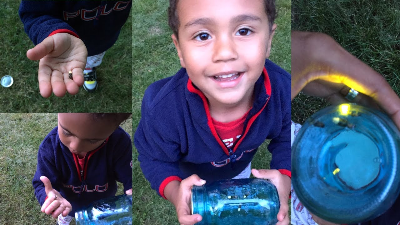 Kids Catching Fireflies For The First Time Summer Fun With