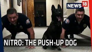 Meet The DOG Who Loves To Do Push-Ups thumbnail