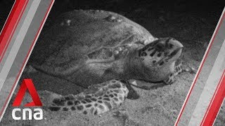 Once turtle poachers, now their guardians
