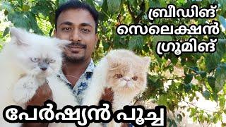 പേർഷ്യൻ പൂച്ചകളുടെ പരിപാലനം  how to care persian cat