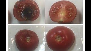 Clay - based antimicrobial packaging keeps food fresh