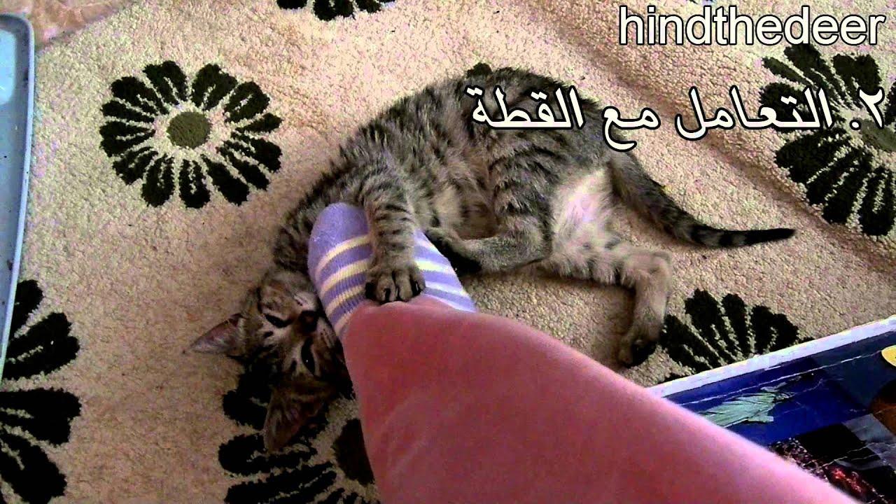 cef55cecd كيف تربي قطة أليفة في المنزل؟ HIND DEER - YouTube