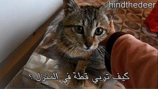 كيف تربي قطة أليفة في المنزل؟ HIND DEER