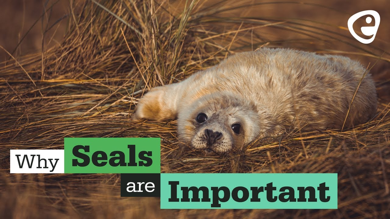 Why are seals important?