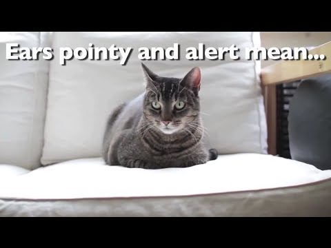 What Your Cat's Body Language is Really Saying