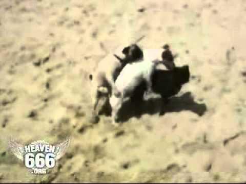 Порно видео Узбеки жарятся на пляже скачать и смотреть