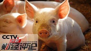 《央视财经评论》 20191027 生猪产能有望探底回升 肉价啥时稳?| CCTV财经