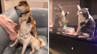 Cute puppies videos | Cute Dogs and Cats compilation 2018 | Funny Tik tok Compilation