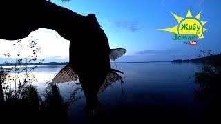 3 дня и 2 НОЧИ в ЛЕСУ. Рыбалка на ДОНКИ. Хитрый подход к ловле ЛЕЩА. Жизнь в палатке - всё ОГОНЬ 👍👍👍