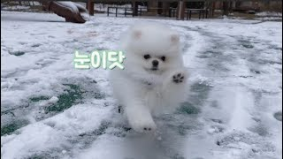 눈을 처음 경험한 강아지 / 눈 오는 날 산책하면 생기는 일