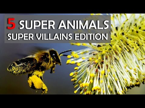 5 animals that will make super villains jealous | FACT-ery #4