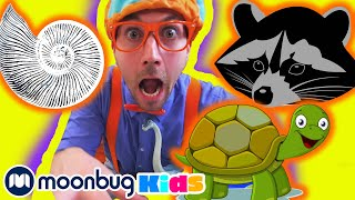 BLIPPI - Visits a Children's Museum  | ABC 123 Moonbug Kids | Fun Cartoons | Learning Rhymes