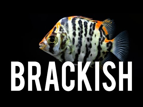 ALL Or Nothing On A Brackish Water Tank