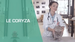 Coryza du chat - Animaux