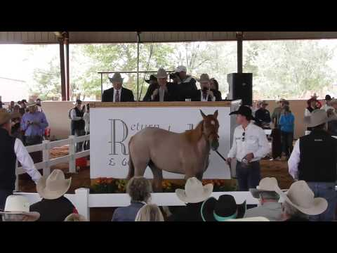 6666 Ranch: Start Of Quarter Horse Auction - 2018 Return To The Remuda