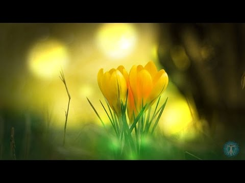 RELAXATION MUSIC for PLANT HEALTH - Binaural Vibrations for