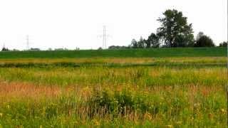 The relaxing sounds of meadow - Relaksujące odgłosy łąki, binaural beats included (6 & 12 Hz)