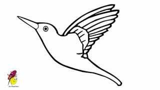 drawings draw easy hummingbird bird drawing simple humming nice paintingvalley