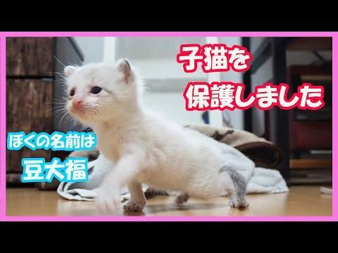 【豆大福1話目】 赤ちゃん猫を保護しました