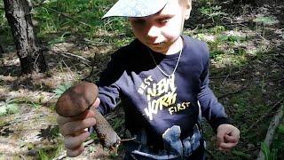 За грибами в лес с ребенком. Изучаем природу.