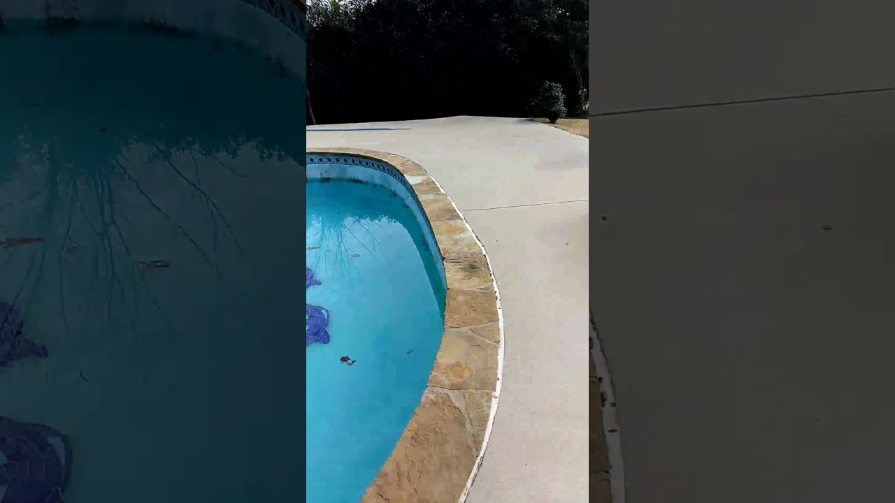 How to clean black algae out of the pool youtube - Black algae removal swimming pool ...