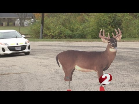 Car-deer collisions