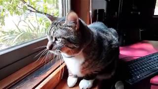 House Cats React to Stray Cat Outside | and Squirrel and Woodpecker