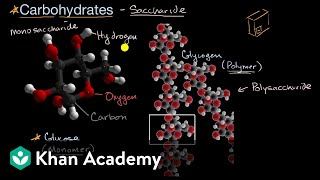 Introduction to carbohydrates | Biology foundations | High school biology | Khan Academy