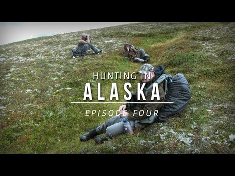Hunting Moose, Caribou, Grizzly And Black Bear Combo In Alaska