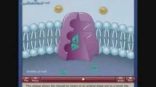 видео Натрий-калиевый насос