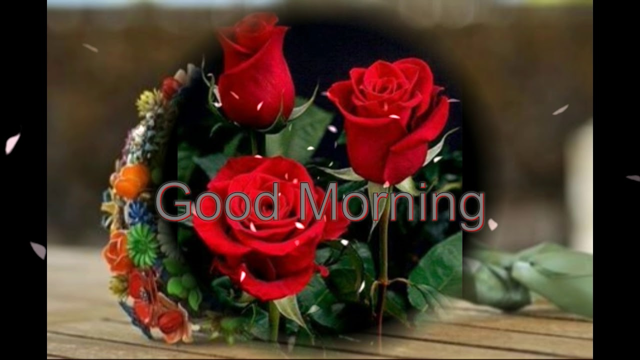 Good Morning Wishes With Beautiful Flowers Wallpapers Youtube