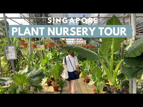 Singapore's World Farm Plant Nursery Tour | plant parenthood