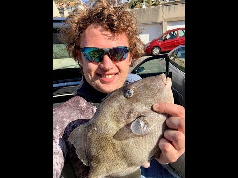 Triggerfish + Red Mullet - Catch And Cook - Spearfishing UK