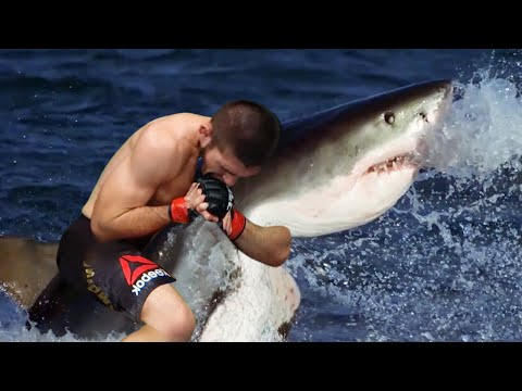 Download The moment the shark realised Khabib would win