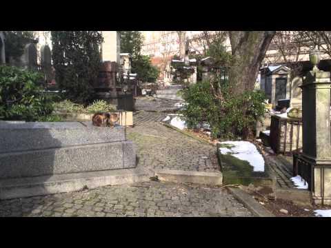 Cimetiere de Montmartre 3  14 13