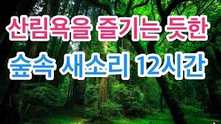 힐링스페셜 - 산림욕을 즐기는 듯한 산속의 물소리와 새소리 ASMR ::Meditation Sound-Various Birds Singing