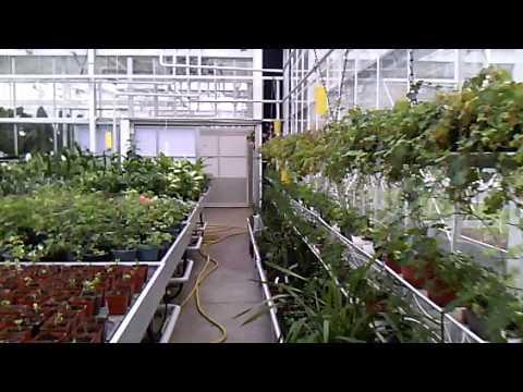 удобный поиск бизнес план по выращиванию мяты в теплице стОит своё объявление
