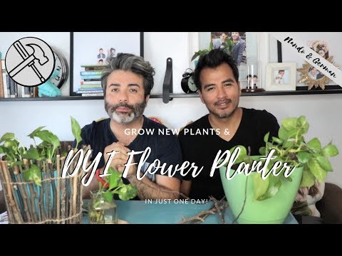 Growing Plants From Cuttings | DYI Planter Decor | How to Grow Devil's Ivy Plant