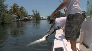 TARPON FISHING - First tarpon of the trip