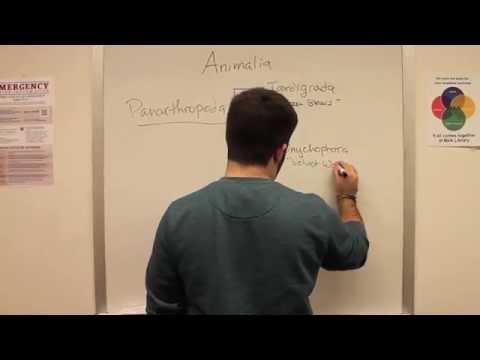Tardigrades and Cryptobiosis