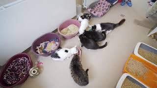 Все они ищут дом ! Приют для животных OTRĀ MĀJA